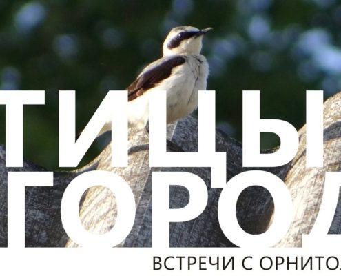 Лекция«Птицы в городе: о редких видах и бёрдвотчинге»