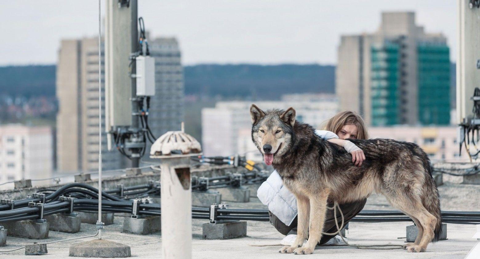 Немецкий фильм «Дикое» («Дикая») 2016 года, актрисы и режиссёра Николетт Кребиц