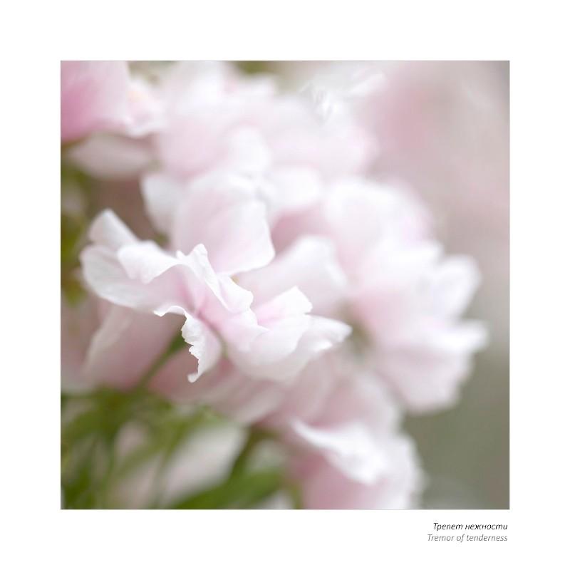 Выставка работ челябинского фотографа Натальи Беленцовой «Вдохновение цветов. Краски новой жизни»