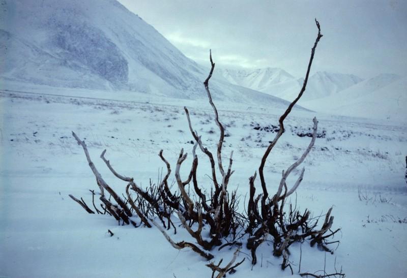 Выставка авторских фотографий Евгения Евтушенко «Я хотел бы родиться во всех странах»